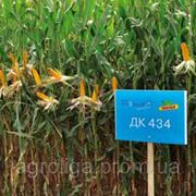 Насіння кукурудзи ДКС 434 ФАО 380 фото