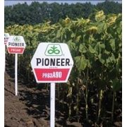 Семена подсолнечника Pioneer ПР63А90 / PR63A90 RM 40 фото