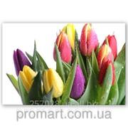 Фотокартина Тюльпани на білому код КН-029 фото