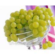 Виноград из Молдавии фото