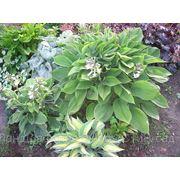 Растения для сада фото