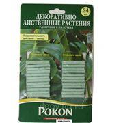 Удобрения в палочках для декоративно-лиственных растений Pokon 24 шт. фото
