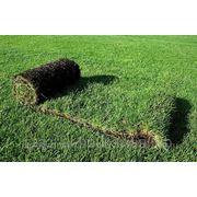 Рулонный газон «Премиум» в Ижевске