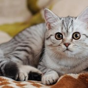 Фотосъемка с животными в Алматы фото