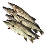 Рыба балычные изделия в Алматы фото