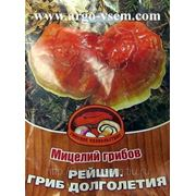 Мицелий Рейши. Купить мицелий Рейши. Мицелий гриба Рейши. Мицелий грибов почтой фото