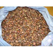 Кедровый орех от заготовщика фото