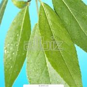 Биологическая защита растений фото