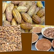 Какао порошок 14 - 16 % жирности фото