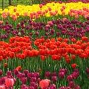 Уход за цветниками. Украина фото