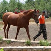 Лошади скаковые фото