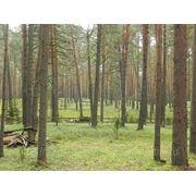Продается 3 га соснового бора на 1 линии р. Волга фото