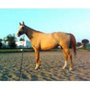 Лактобифадол для лошадей фото