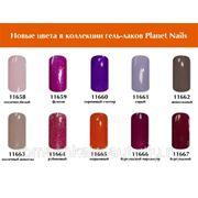 Гель-лак новые цвета из коллекции Planet Nails (в ассортименте) фото
