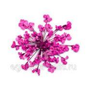 Сухоцветы салютики Розовые фото