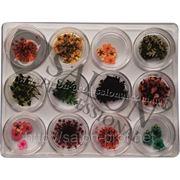 Сухоцветы Salon Professional ,набор 12 штук