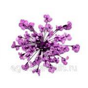 Сухоцветы салютики Сереневые фото