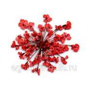 Сухоцветы салютики Красные фото