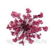 Сухоцветы салютики Бордовые фото