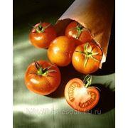 Пакеты крафт для помидоров фото