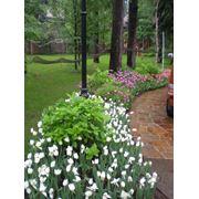 Проектирование садов фото