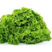Салат листовой фото