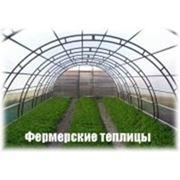 Теплица Арочная- 12 фото