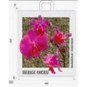 """Пакет """"Орхидея"""" с петлевой ручкой фото"""