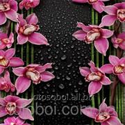 """Фотообои """"Малиновые орхидеи 210х196 (12Л)"""" Ника фото"""