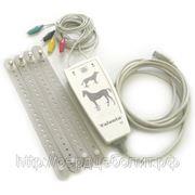 Кардиограф для ветелинарии ЭКГК-02 USB к компьютеру фото