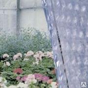 Пленка воздушно пузырчатая парниковая (тепличная) фото