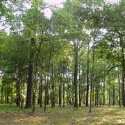 Охрана лесов от пожаров фото