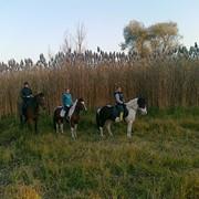 Конные прогулки в Молдове фото