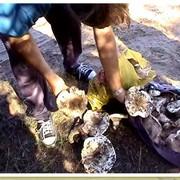 По грибы фото