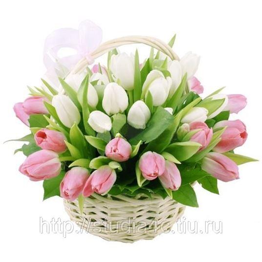 Купить тюльпаны за 20 рублей купить саженцы мини розы петербург ленобласть