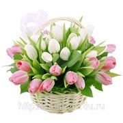Тюльпаны по 20 рублей!!!