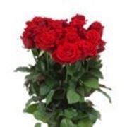 Розы оптом и в розницу СПб фото