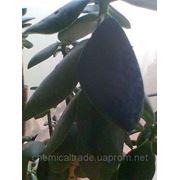 фото предложения ID 7344488