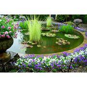 Ландшафтный дизайн. Благоустройство и озеленение. фото