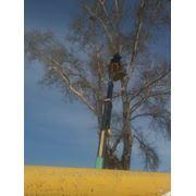 Снос аварийных деревьев. фото