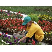 Посадка цветов Тюмень фото