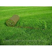 Озеленение -все виды 329-77-82 фото