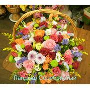 Цветы,букеты, композиции, ,доставка. фото