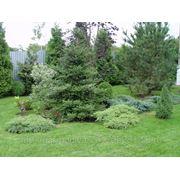 Посадка кустарников и деревьев фото