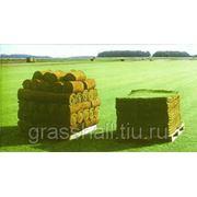Рулонные газоны в Нижнем Тагиле фото