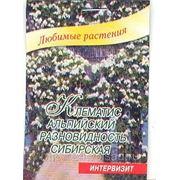 Клематис альпийский разновидность сибирская семена в мини-тепличках 5 шт фото