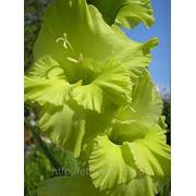 Авторское фото цветов для оформления интерьеров фото
