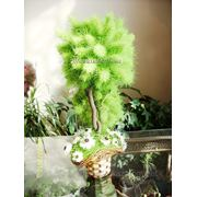 Топиарии из сухих цветов фото