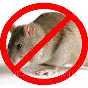Дератизация. Уничтожение грызунов (крыс, мышей) фото