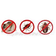 Профессиональное избавление от тараканов, клопов, муравьев, крыс, мышей, кротов и пр. фото